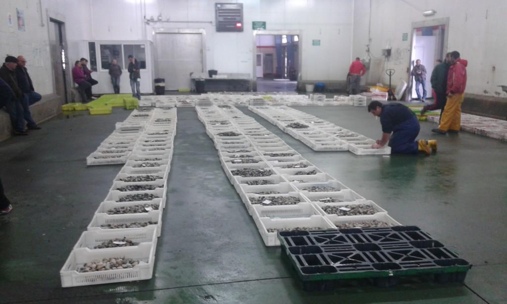 Clasificación del marisco en la Lonja de Ribeira