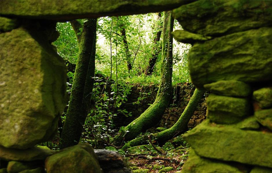 Bosque en la Isla de Cortegada