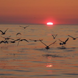 puesta del sol finisterre