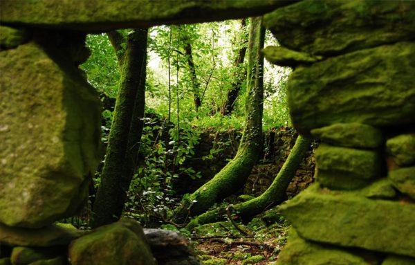 Ruta a pie bosque Cortegada