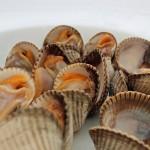 fiestas_gastronomicas_de_enero_berberechos