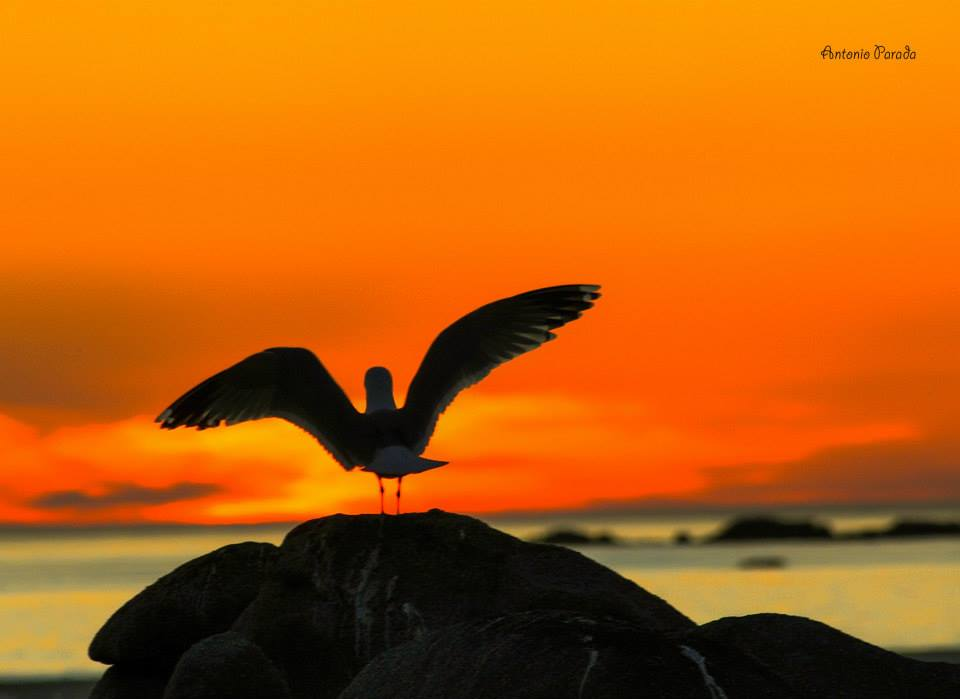 aves galicia