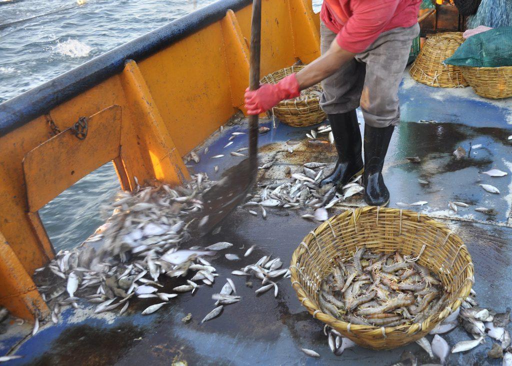descartes-pesca