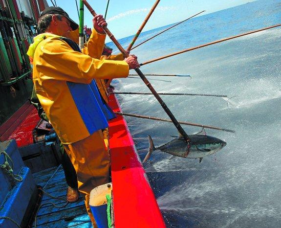 Pescado de verano qu se lleva esta temporada - Que se lleva este verano ...