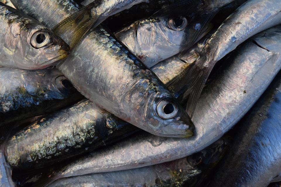 Pescado De Verano Qué Se Lleva Esta Temporada