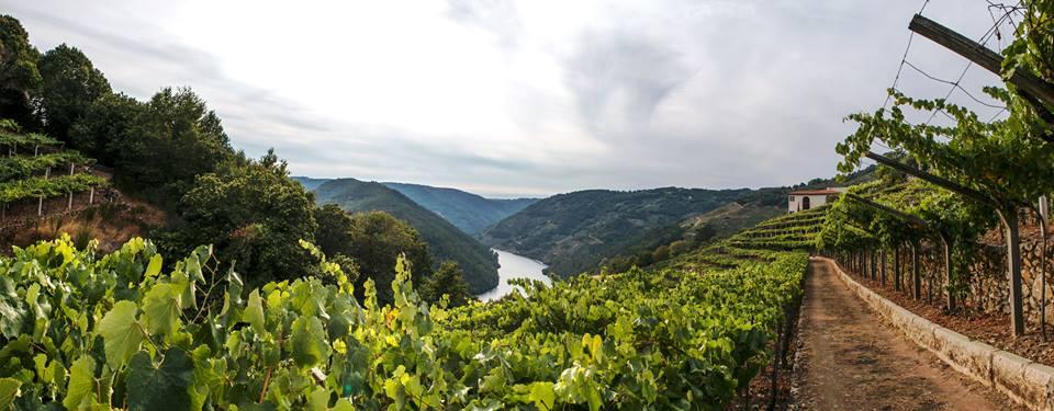 Secretos elaboración del vino en la Ribeira Sacra