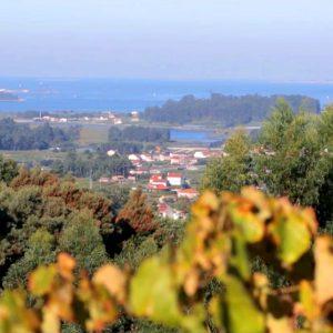 Visita a bodega del Salnés