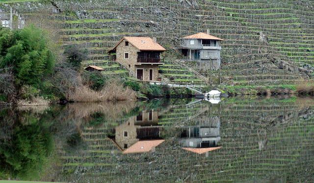 Viñas río Miño Denominaciones de Galicia