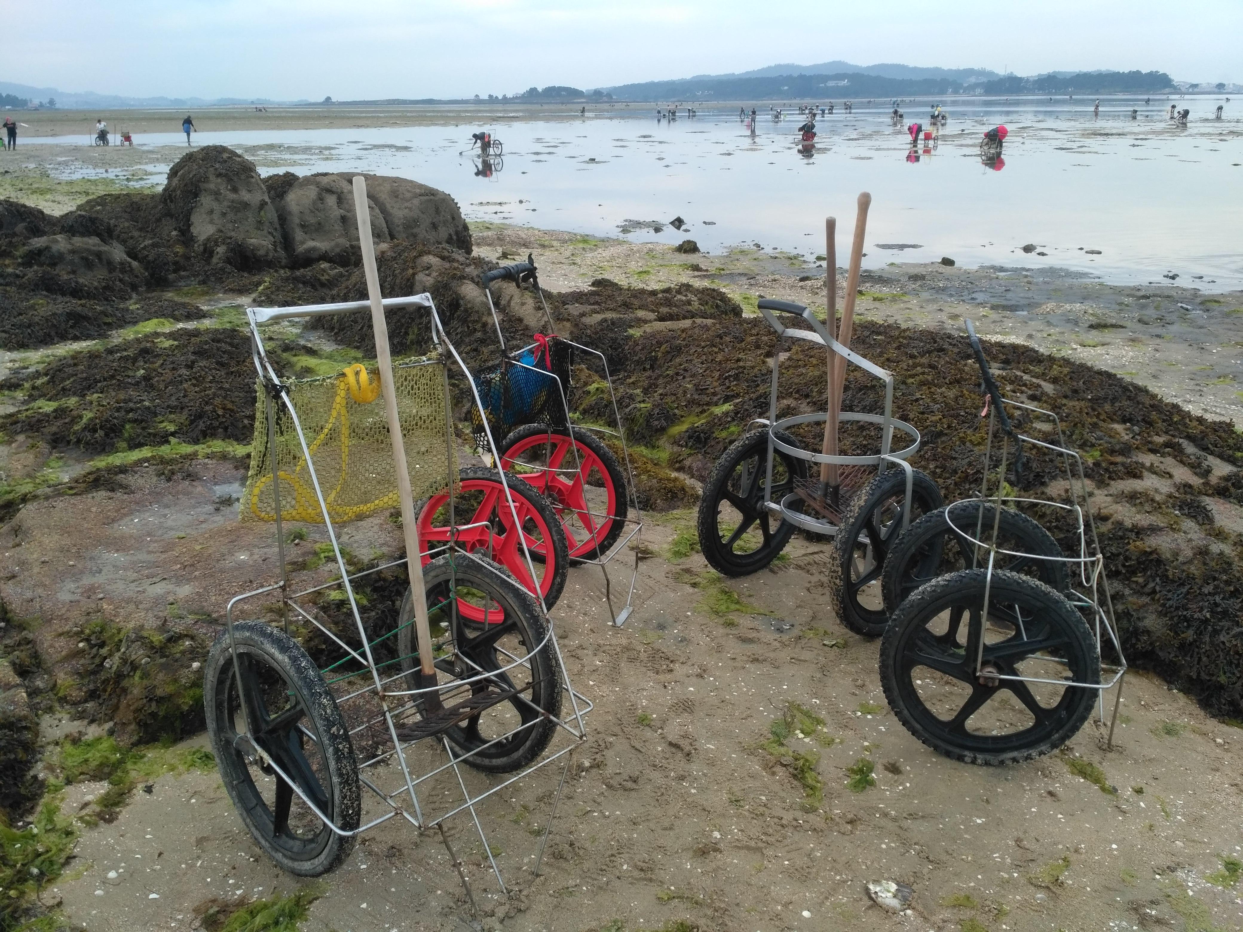 Ruta del marisqueo en Cambados