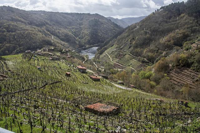 Río Miño Ribeira Sacra Denominaciones de Galicia