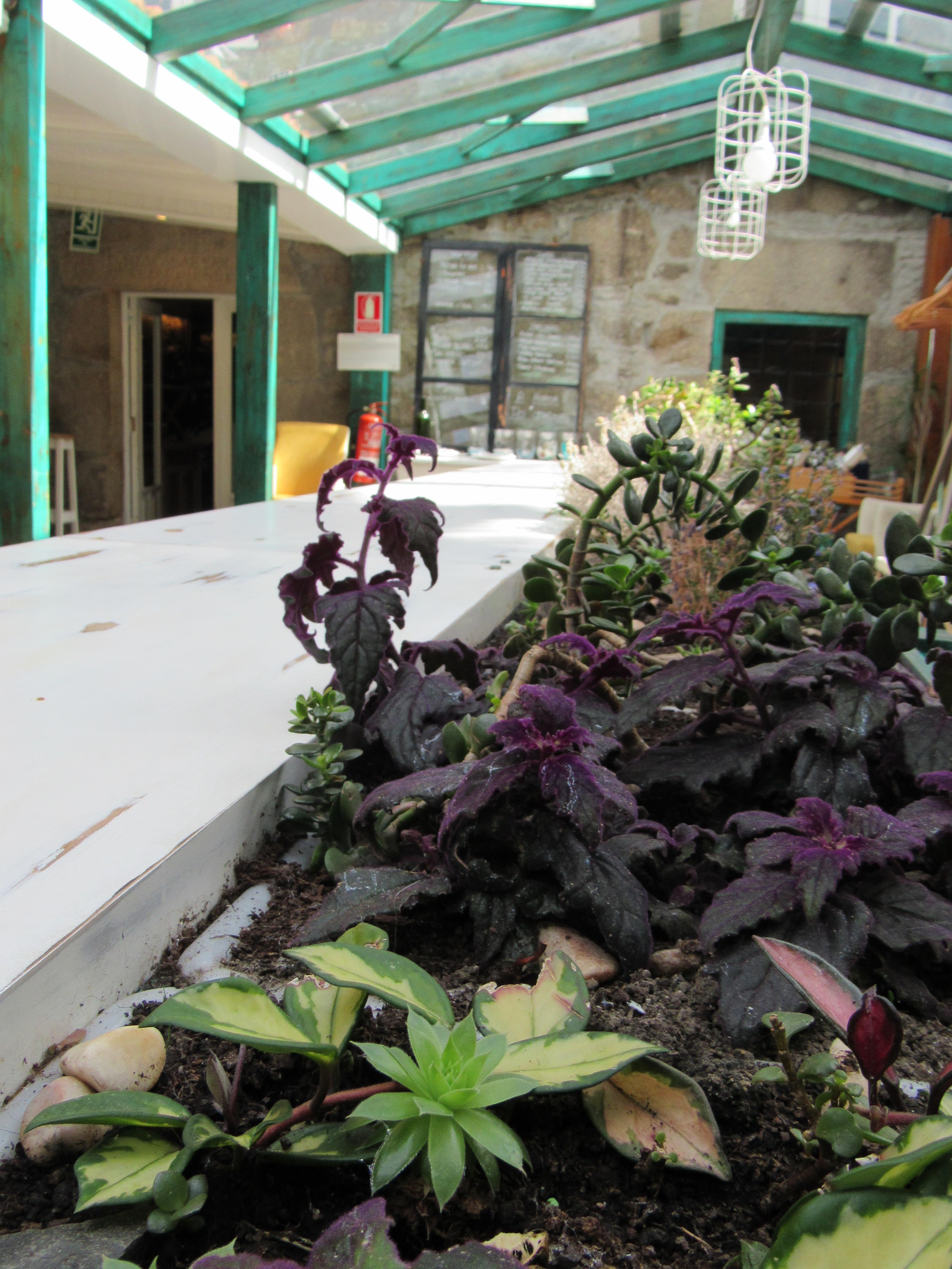 Invernadero en A horta do Obradoiro kike piñeiro