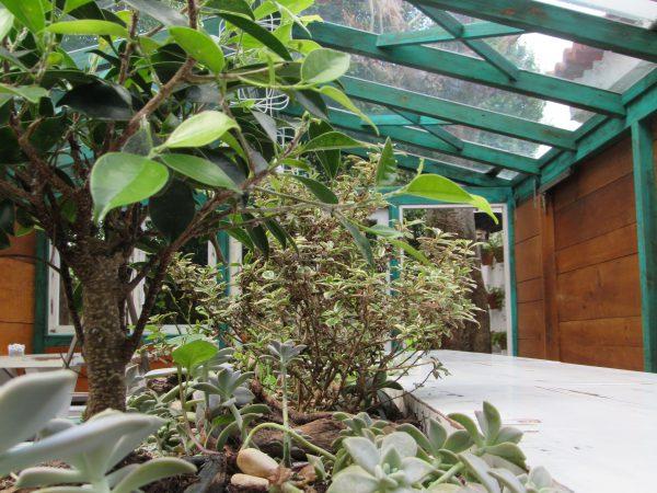Mesa Invernadero en A horta do Obradoiro kike piñeiro