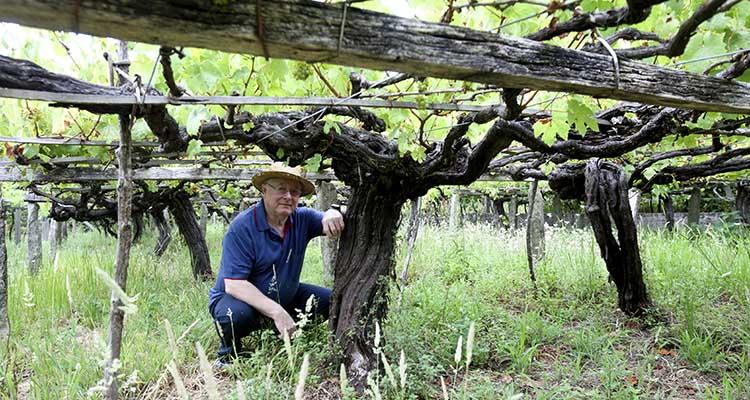 vinos de barbanza antonio saborido