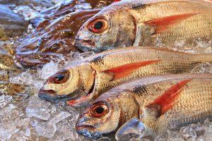 Pescado semigraso