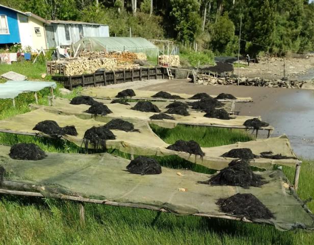 Turismo comunitario con pescadores locales en el sur de Chile8