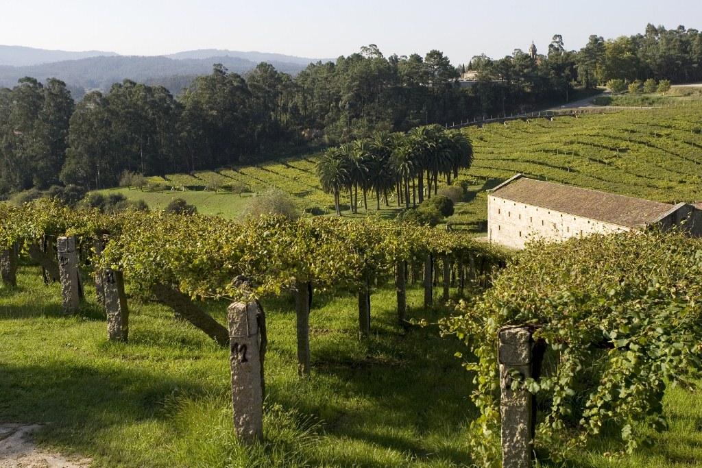 visita a viñedo en Galicia