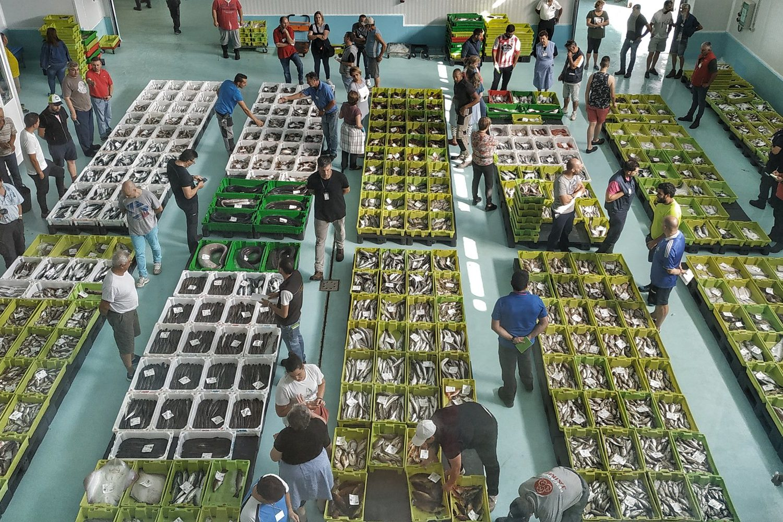 visit fish market in Galicia