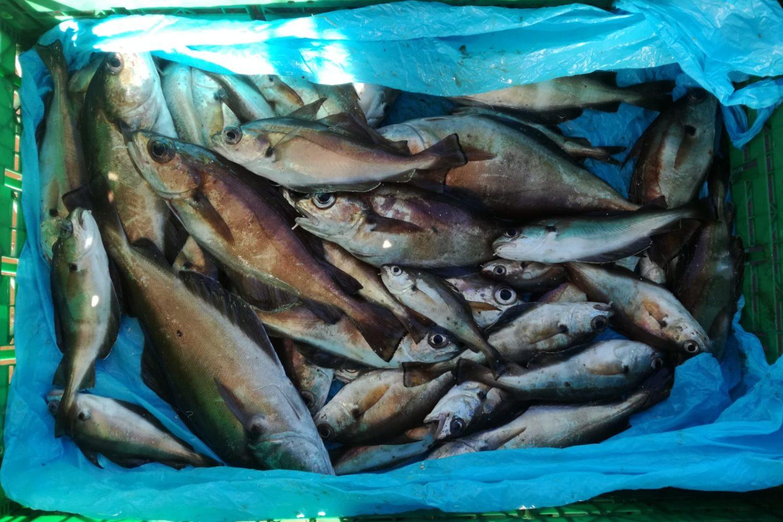 Pesca en Galicia