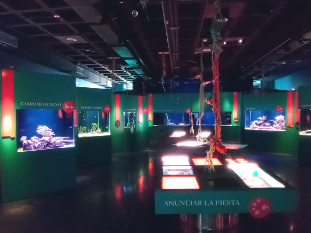 Aquarium Finisterrae Sala Maremagnum