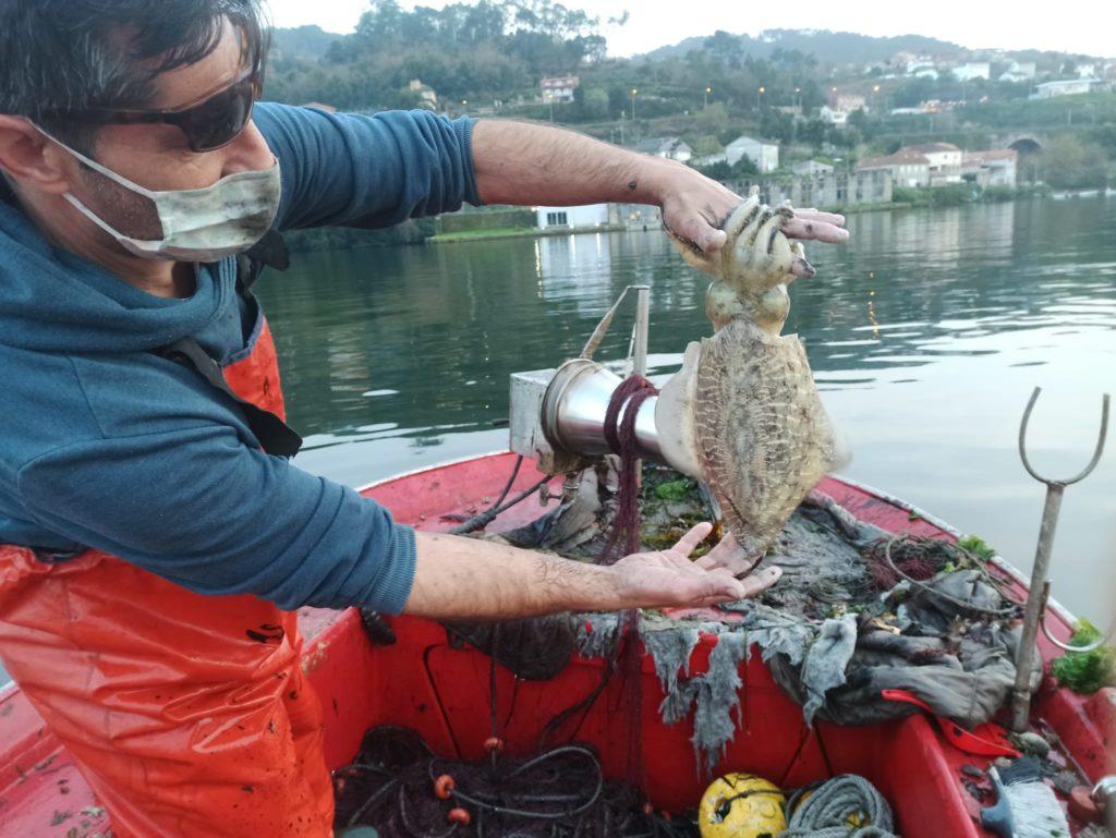 pesca del choco en Redondela